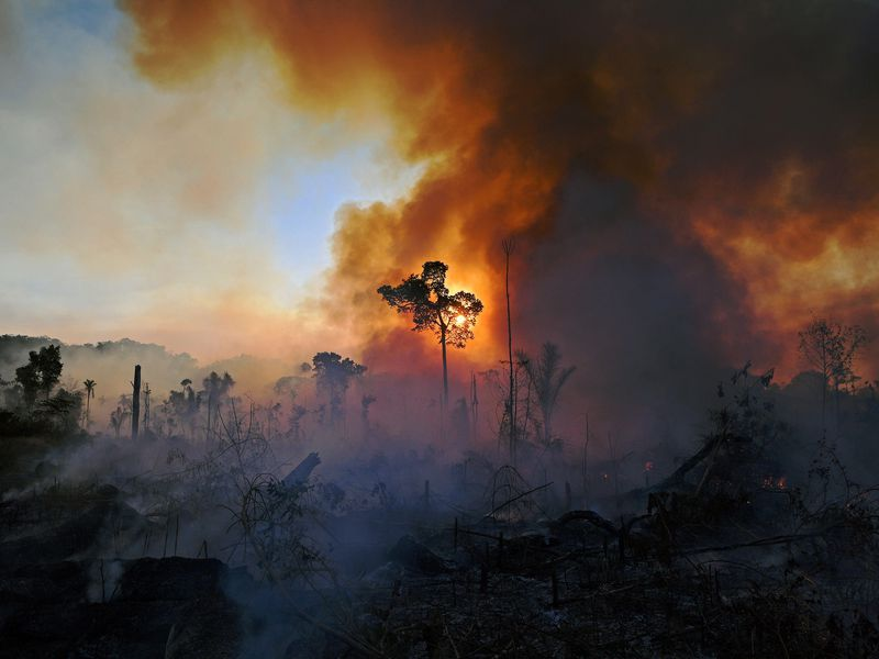 A cloud of smoke rises on the right over a rainforest treetops, with one tall tree illuminated from behind by the sun, and smoke. Hints of blue sky to the left
